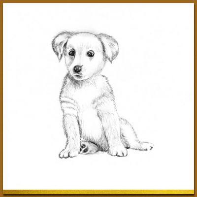 Dierenkaart met puppy, hondje