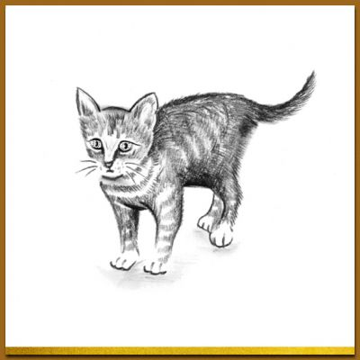 Ansichtkaart in zwart wit met mooie tekening van poesje, kitty