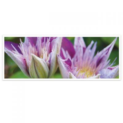 Horizon - wenskaarten-serie met bloemen - Clematis