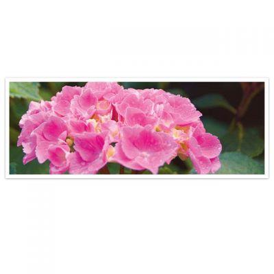 Horizon – wenskaarten-serie met bloemen - Hortensia