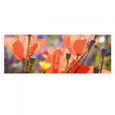 Horizon – wenskaarten-serie met bloemen - Klaproos