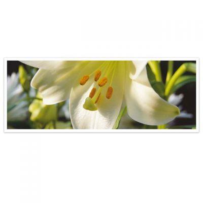 Horizon - wenskaarten-serie met bloemen - Lelie