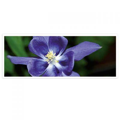 Horizon - wenskaarten-serie met bloemen - paarse bloem