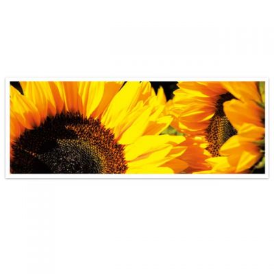 Horizon - wenskaarten-serie met bloemen - Zonnebloem