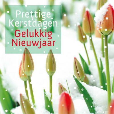 Besneeuwde tulpen