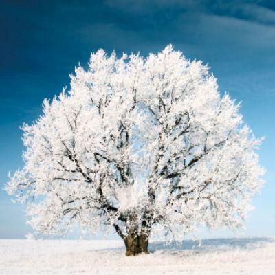 Kerstkaart met mooi besneeuwde boom.